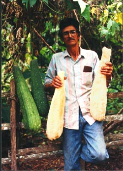 Loofah worker holding loofah without pulp and standing next to the loofah vegetable.